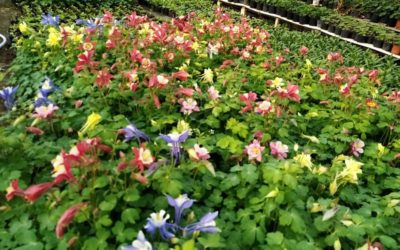 Flori de seră Lovrin