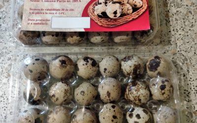 Ouă de prepeliță în Parța